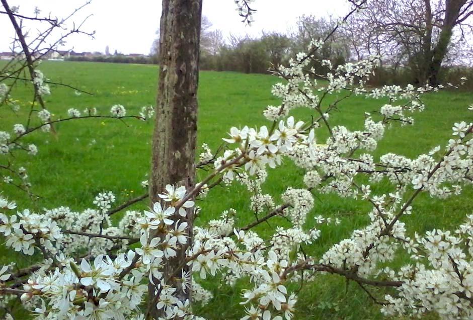 Meadow of Moulin de Saint Georges, gite de charme en Bourgogne